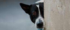 Como são julgados os casos de maus-tratos aos animais?